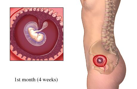 Менструация при беременности 2 недели